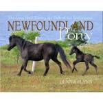 NewfoundlandPony