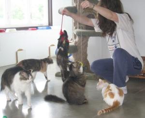 Cats_Allison