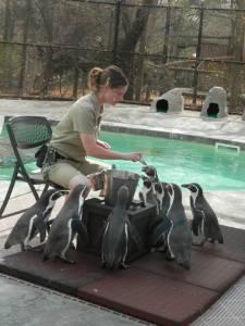 PenguinsFed