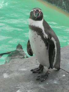 PenguinSolo