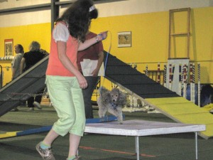 Allison and Barnaby take an agility class