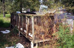 Puppy Mills Wikipedia Commons