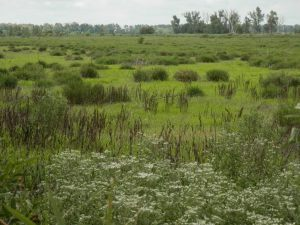 IndianCave_Marsh