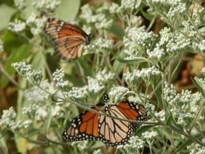 IndianCave_MarshButterflies1