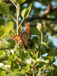 IndianCave_MarshButterflies2