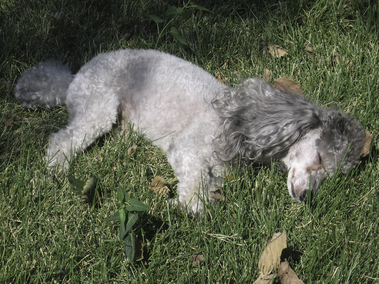 Video Of Dog Playing Dead