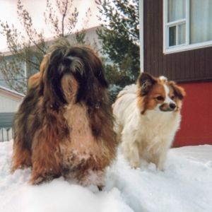 Dogs_Snow
