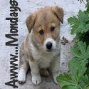 AwwwMondays-Puppy-Avatar