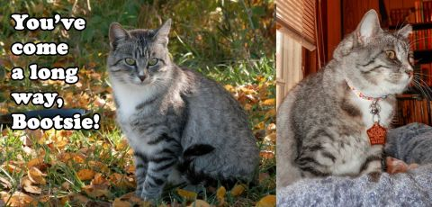 BootsieBefore&After