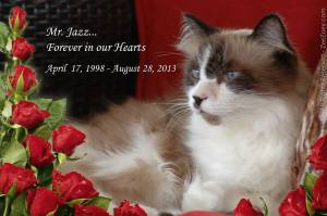 Jazz, Photo from Purr Prints of the Heart Facebook Page